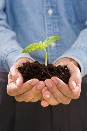 SEO is Like Planting a Seedling