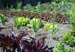 Garden Variety Speaking