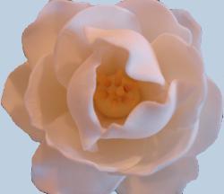 Flower Made of Sugar